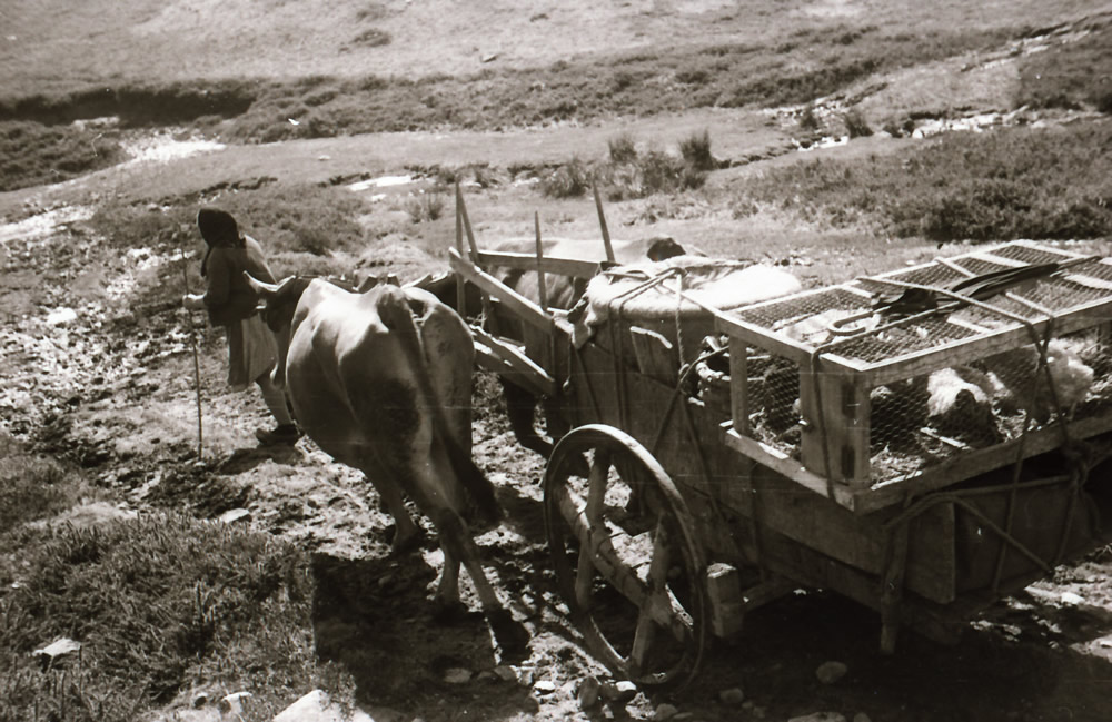 Vaqueiros de Antaño